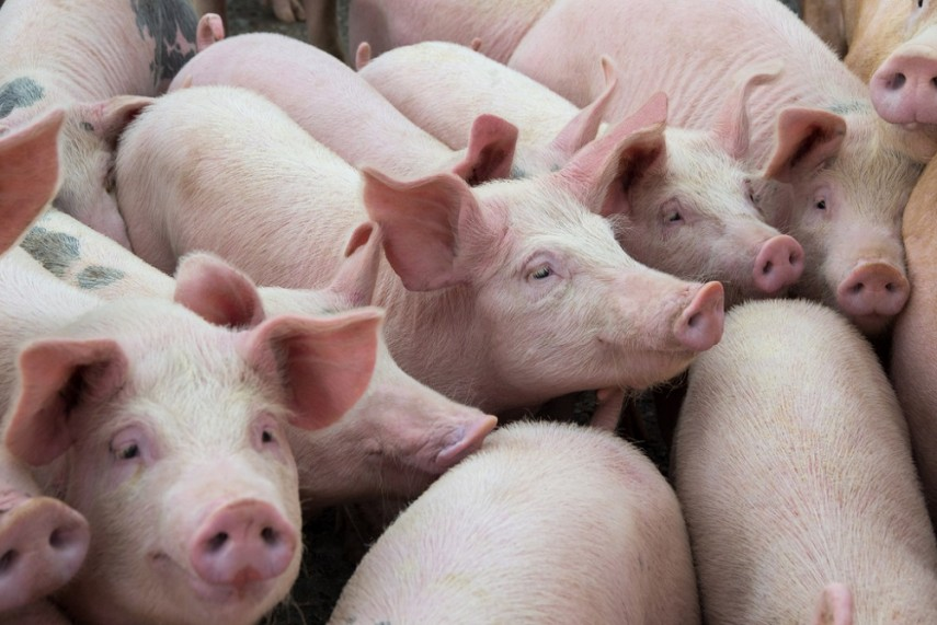 'Pandemic Potential': New Swine Flu Strain Discovered In China