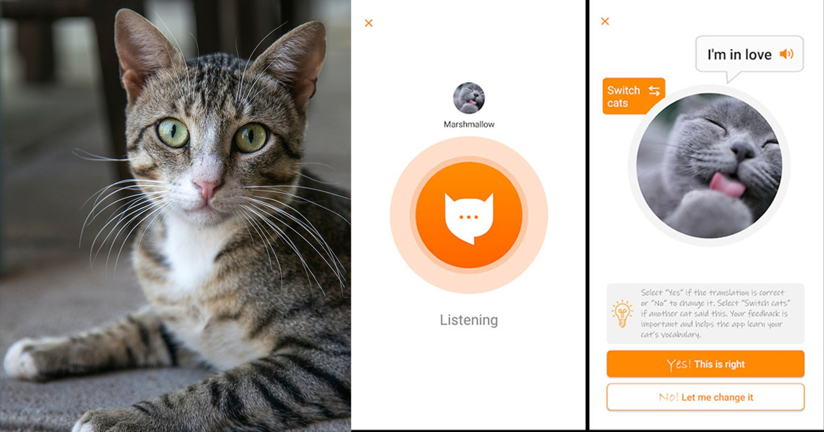 MeowTalk : You Can Now Talk With Your Cat!